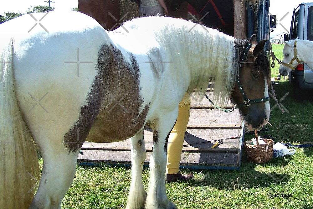 Gypsy Vanner .. a paint stallion by LoneAngel