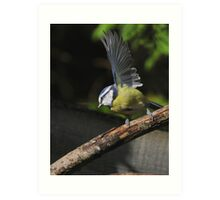 blue tit waving to the camera Art Print