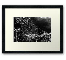 Dewy spiders' webs Framed Print