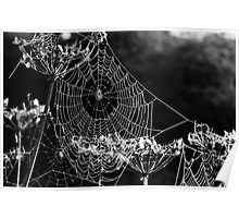 Dewy spiders' webs Poster