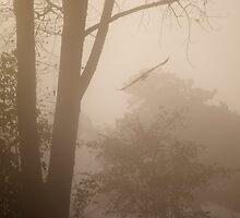 misty morning by Mark de Jong