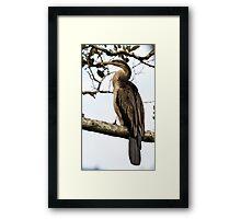 Snakebird - Australian Darter Framed Print