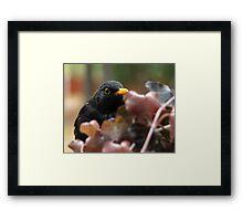 Autumn Guest Framed Print