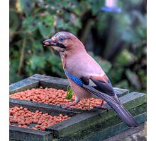 """""""Nuts"""" about Nuts Photographic Print"""