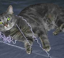 Cat on a String by royxnavy
