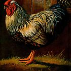 Silver Laced Wyandotte Large Fowl by alan carlson