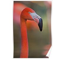 Flamingo Portrait - Sacramento Zoo Poster