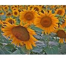 Summer beauty! Photographic Print