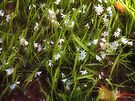 Patch of Spring by RC deWinter