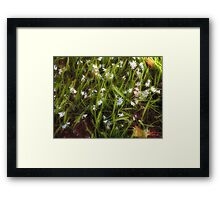 Patch of Spring Framed Print