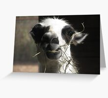 just for fun...... petting zoo style Greeting Card