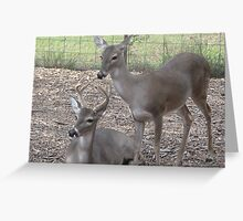 just for fun...... petting zoo style 2 Greeting Card