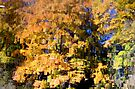 Fall Reflections by Debbie Pinard