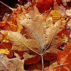 Rain on a Fall Maple Leaf by Debbie Pinard