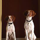 Portrait of Two Beautiful Britney Spaniel Pups by Nina Brandin