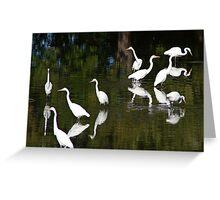 Egrets Bathing Greeting Card