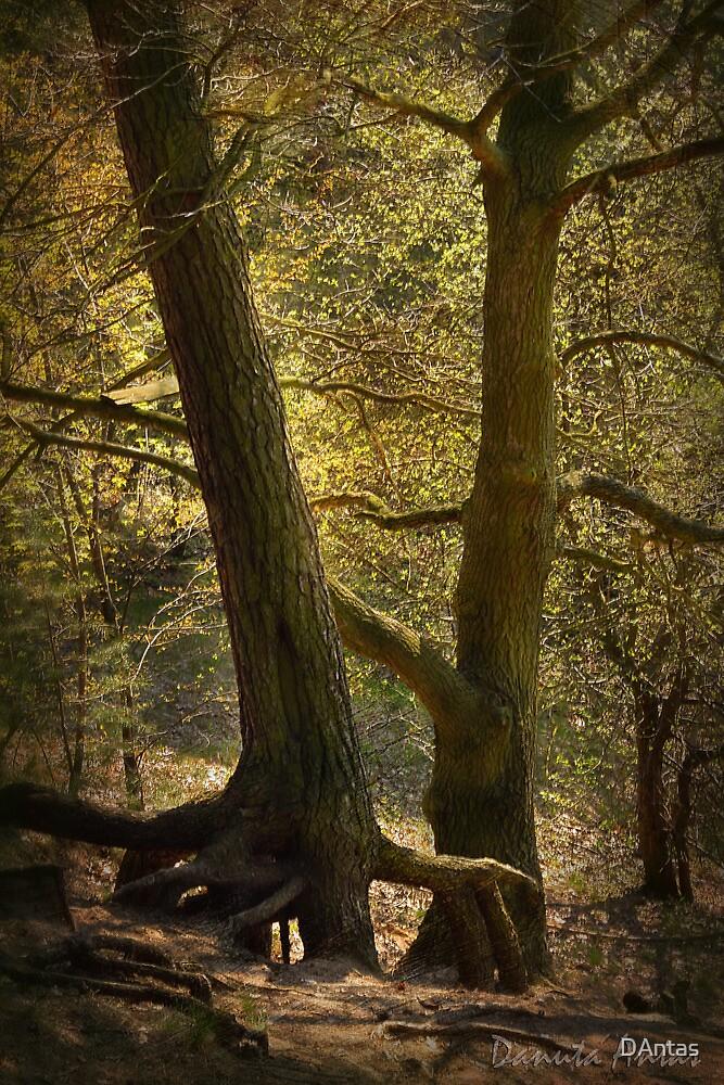 Mystic Touch by Danuta Antas
