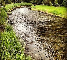 Riverside Greenery by JULIENICOLEWEBB