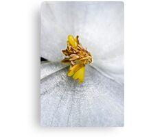 Wax Flower Macro Canvas Print