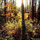 Go Toward the Light by Deb  Badt-Covell