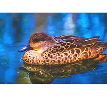 Painted Duck Photographic Print