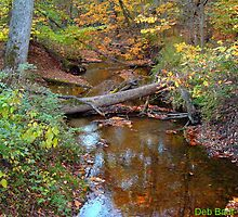 """""""In the Fall, the Leaves, Leave"""" - II by Deb  Badt-Covell"""