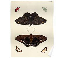 Exotic butterflies of the three parts of the world Pieter Cramer and Caspar Stoll 1782 V2 0267 Poster