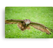 Eagle Owl test flight Canvas Print