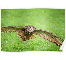 Eagle Owl test flight Poster
