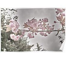 Vintage Blooms Poster