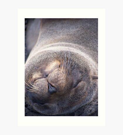 Galapagos Seal Art Print
