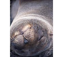 Galapagos Seal Photographic Print