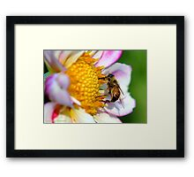 The Bee Framed Print