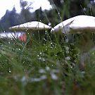Mushroom in the rain by Heidi Mooney-Hill