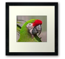 Military Macaw Framed Print