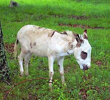 Whoa Mule, Jack??? by David  Hughes