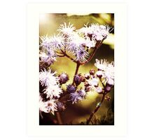 purpleflower Art Print
