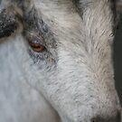 Goat Up Close by Dana Yoachum