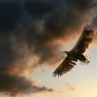 Soaring by SquarePeg