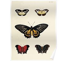 Exotic butterflies of the three parts of the world Pieter Cramer and Caspar Stoll 1782 V3 0017 Poster