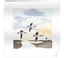Canada Geese in Flight II Poster