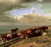Windswept Ponies standing on the cliffs during winter in Cornwall by Lord William Chard