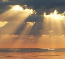 """""""Apricot Rays"""" by debsphotos"""