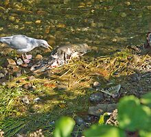 Food Chain by lincolngraham