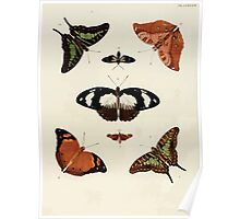 Exotic butterflies of the three parts of the world Pieter Cramer and Caspar Stoll 1782 V3 0162 Poster