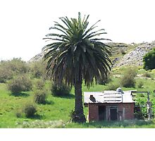 The Palm Shack Photographic Print