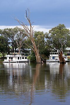 Houseboats on the River Murray by Joanne Emery