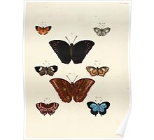 Exotic butterflies of the three parts of the world Pieter Cramer and Caspar Stoll 1782 Supplement 0251 Poster