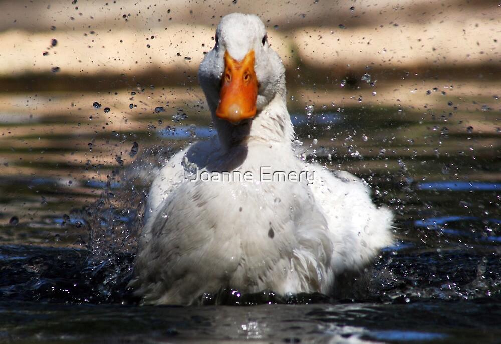 White duck splashing water by Joanne Emery
