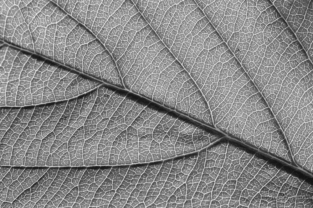 Leaf 9119 by João Castro